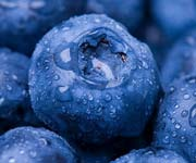 Blueberries Picture - 13 Fat-Fighting Foods - Healthy Living - MedHelp
