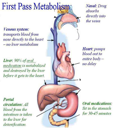 First Pass Metabolism